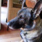 Enzo's Ears!