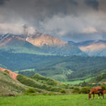 Horse with mountain background