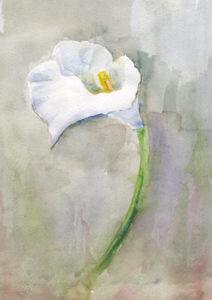 Ann's Flower